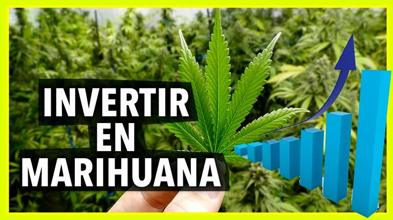 ¿Cómo invertir en Marihuana?